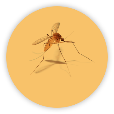 Mosquito on circular yellow background