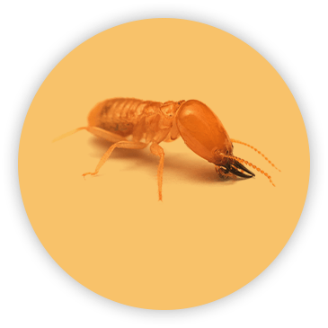 Termite on circular yellow background
